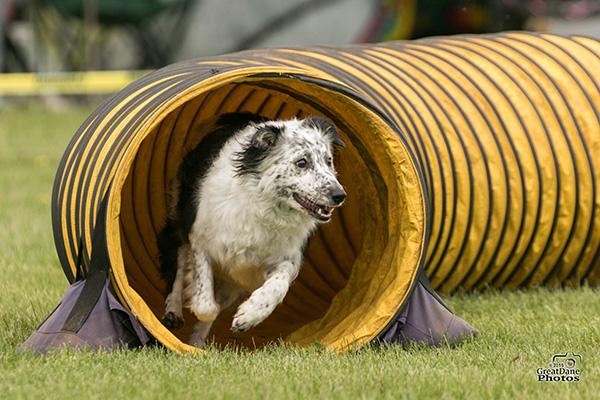 dog training agility course in angora mn